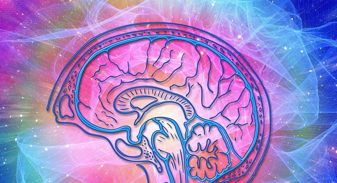 How To Look After Your Blood Brain Barrier