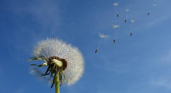 Quercitin and Bromelain: Formidable Against Summer Sneezes