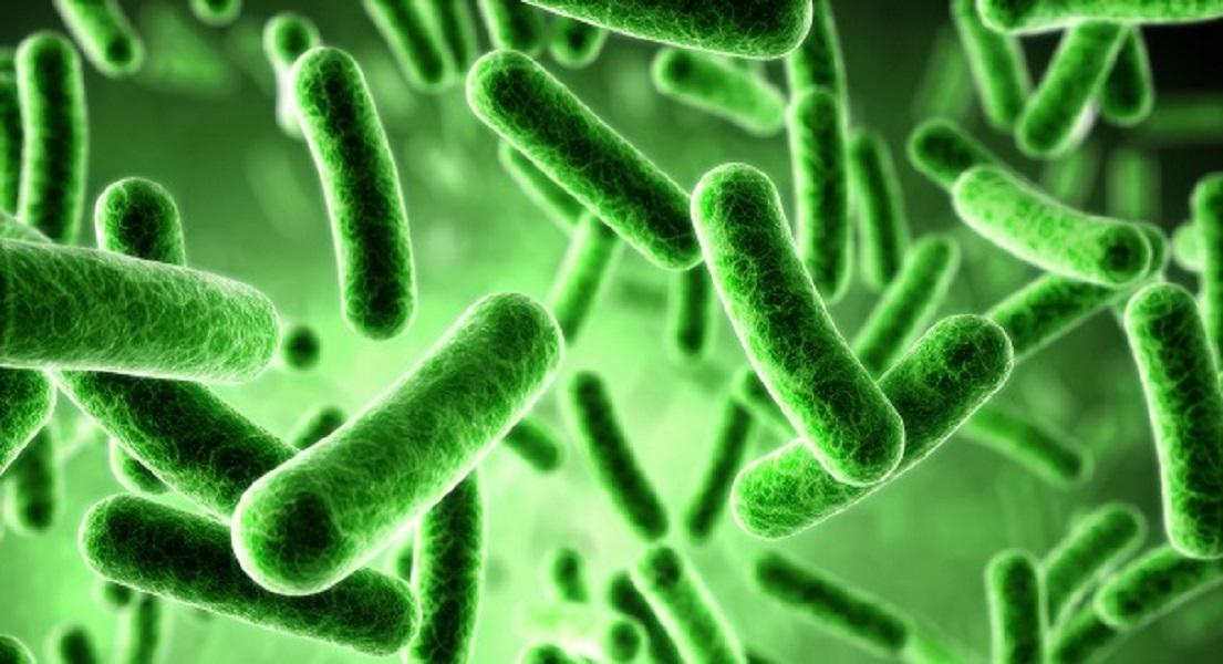 10 Quick Facts About Friendly Bacteria