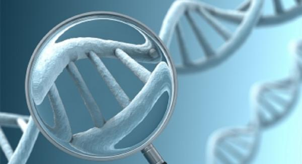 FUT2 Genetic Polymorphism – an Important Part of the Bigger Health Picture