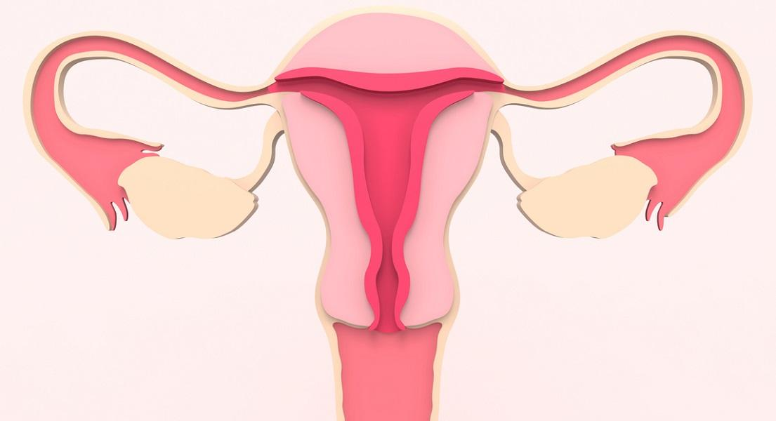 Natural Ways to Support Vaginal Dryness During Menopausal Transition