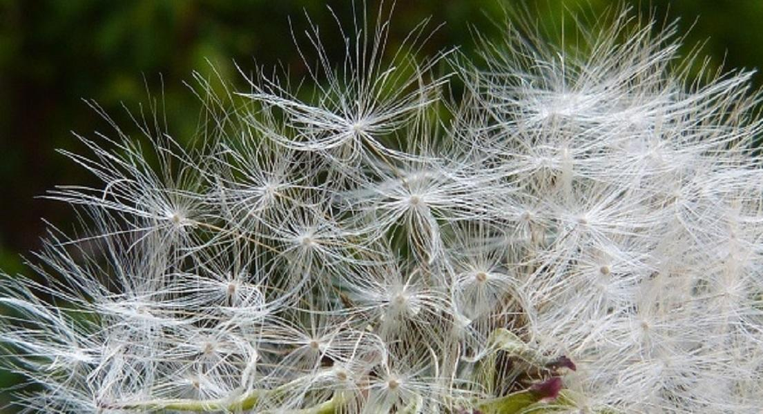 Hay Fever: A Natural Action Plan