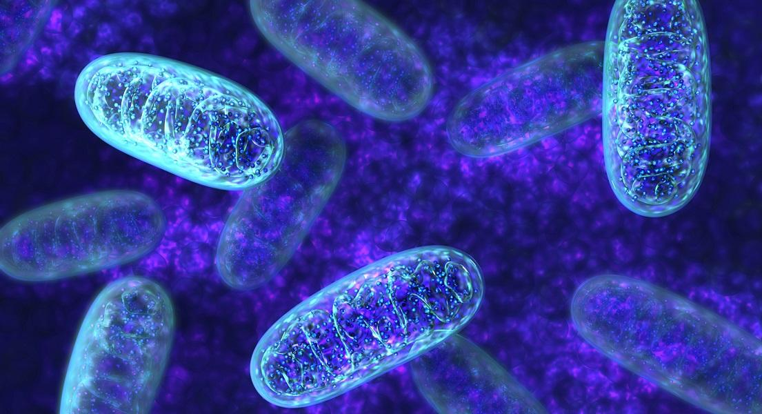 5 Ways to Protect Your Mitochondrial Health