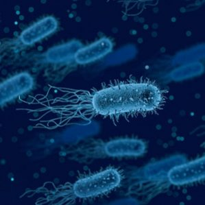 5 Incredible Health Benefits of Friendly Bacteria