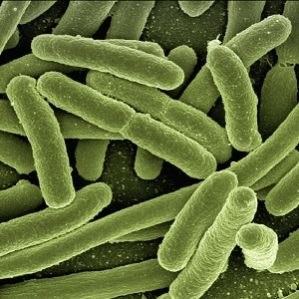 The Positive Effect of Probiotics on Animals