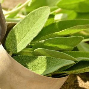 Could Sage Be The Answer To Peri-menopausal Hot Flashes?