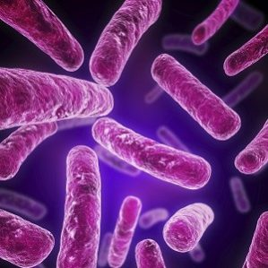 How to Nurture Healthy Gut Bacteria For Good