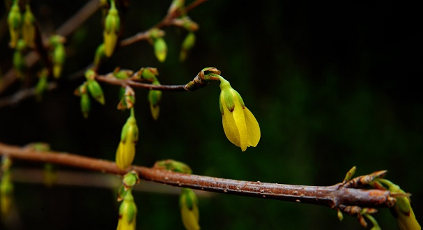 The Benefits of Berberine for Blood-Glucose Lowering